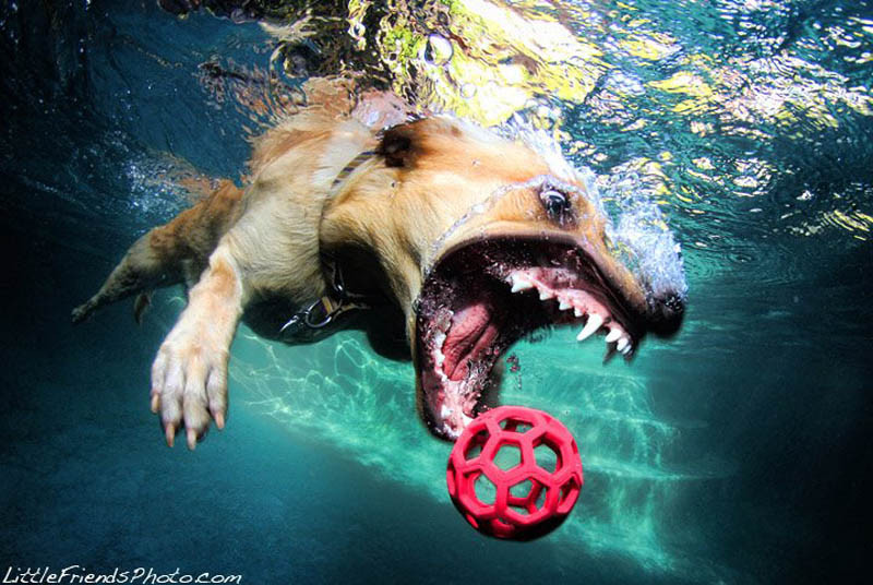 Best Shutter Speed To Use For Dog Photography
