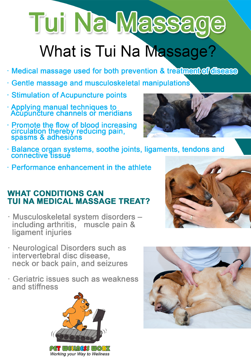 How To Massage Your Dog Or Cat Pethealthcare Co Za
