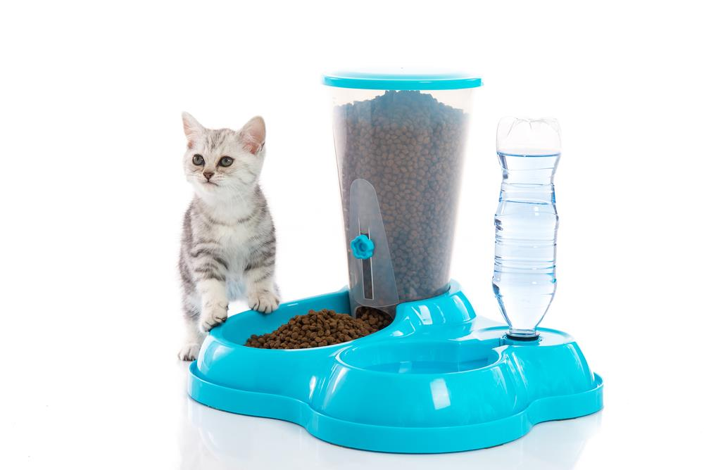 Best Automatic Cat Feeder For Two Cats