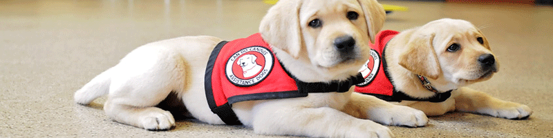 What Is A Service Dog Why They Are So Important Pethealthcareco