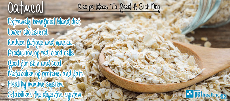 What To Feed Your Dog When Its Sick Pethealthcarefood For