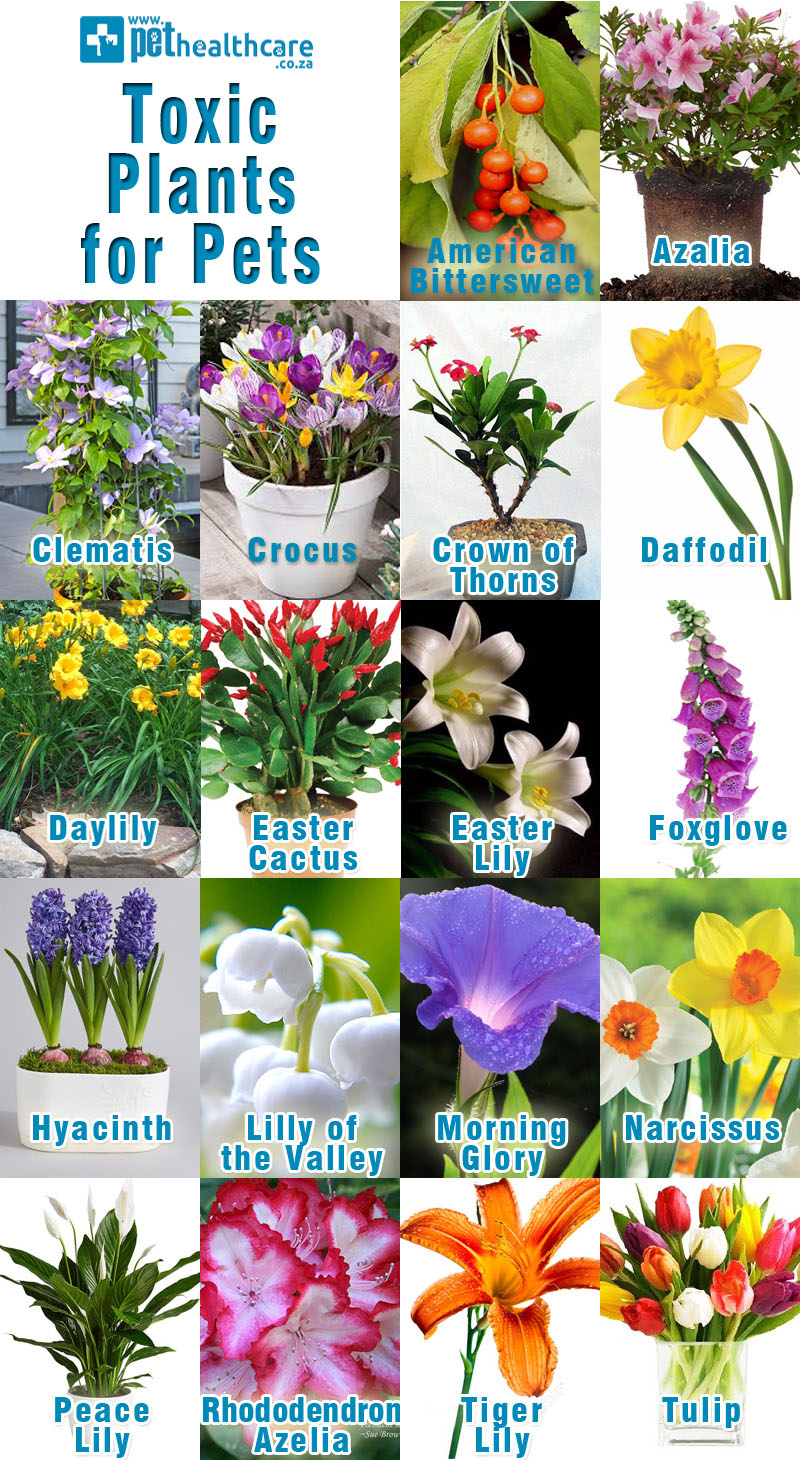 Toxic plants for pets pethealthcaretoxic plants for pets flowers are a wonder of nature but it is important to know when they are not good for our pets izmirmasajfo Choice Image
