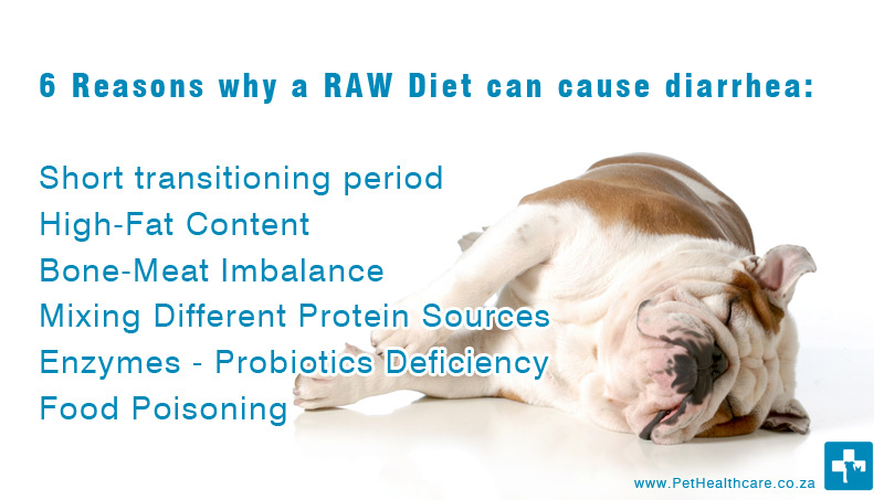 6 Reasons That Will Cause Diarrhea In Raw Eating For Dogs
