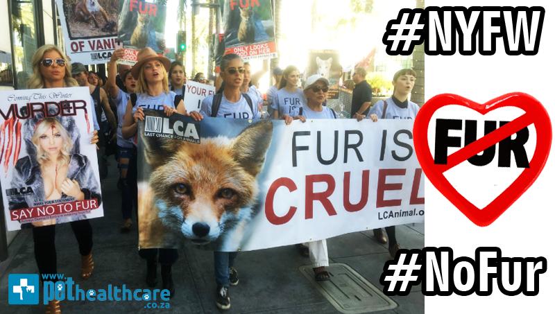Image result for Prada Fur Free Alliance»