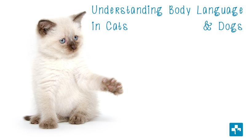 understanding body language in pets dogs cats pet healthcare pawpaw pet insurance