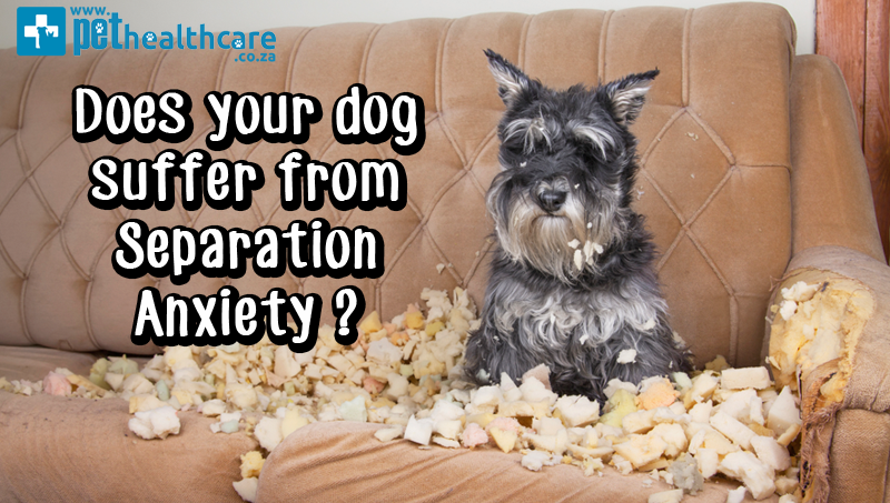 Separation Anxiety Causes and Advice, Pet ownership,