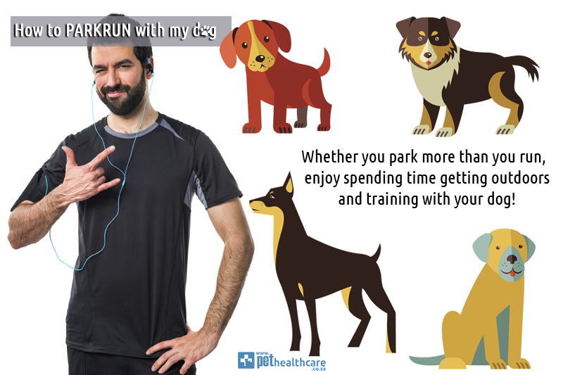 How-To-Parkrun-with-my-dog-PetHealthcare-5-best-gear-to-use-short-lead-harness-dog-stroller-water-bottle