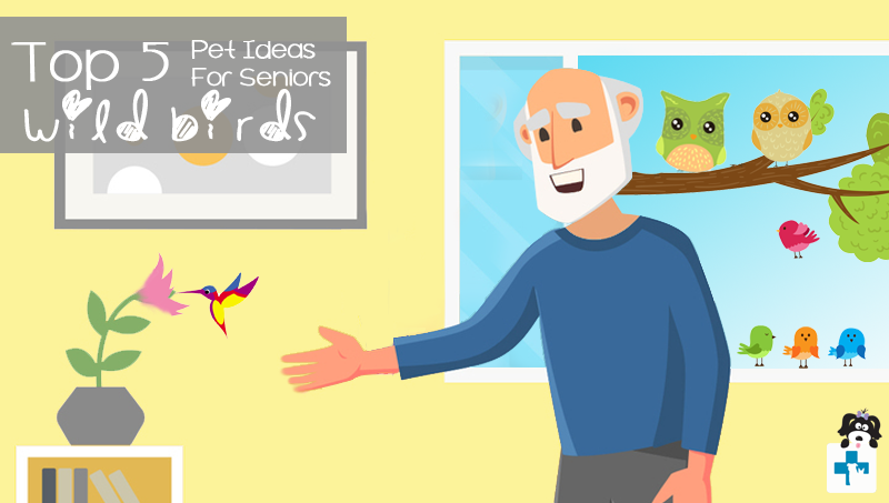 Top five Pets for Seniors and Retired people, Pet Ideas, Pet Healthcare, Pet Insurance, Dogs, Cats, Robotic Pets, Wild Birds, Fish