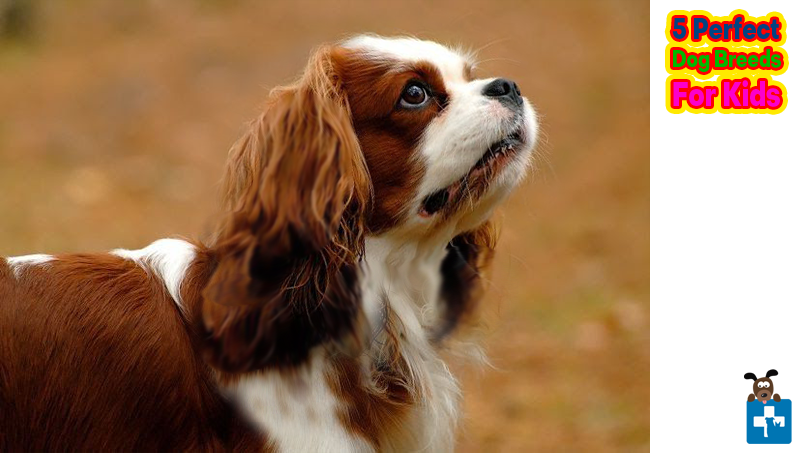 Perfect Dog Breed for Kids, children, Pet Healthcare, Beagle, cavalier king charles, labrador retriever, irish setter, cocker spaniel