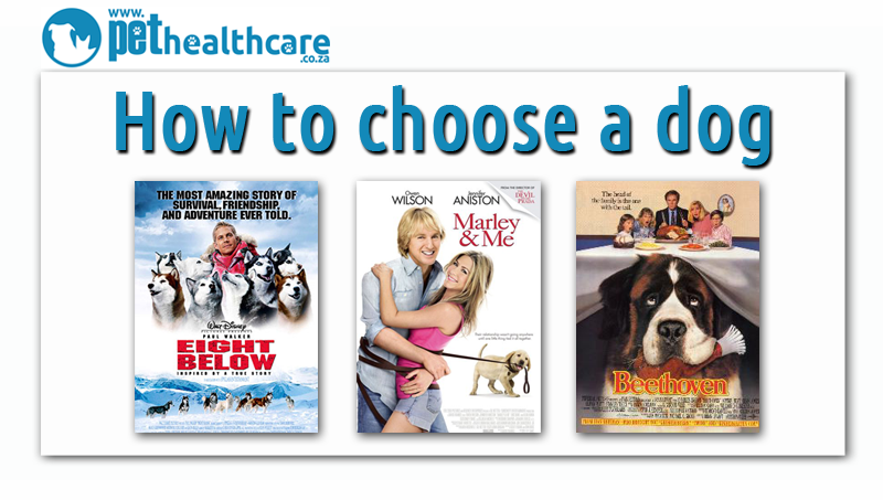 how to choose a pet dog