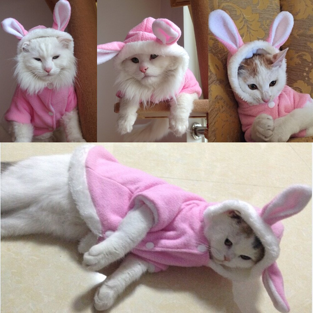 Cats, Cat behaviour, dignifiedly wild cats, keep cats wild, why keep cats wild, why you should not dress your cat, respecting animals, respect cats,