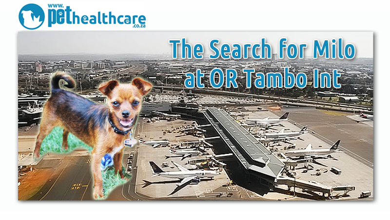 Milo The Puppy Gets Lost At Or Tambo International Airport