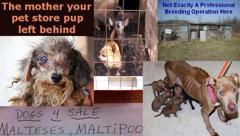 stop puppy brokers and immoral breeders