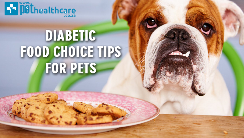 Diabetic Food Choice Tips For Pets Pethealthcare Co Zadiabetic