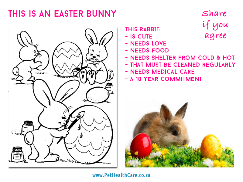 Animals are not good gifts pethealthcareeaster orphans easter is upon us and many people have the urge to suddenly give little bunnies chickens and even ducklings as gifts to their children especially for negle Choice Image