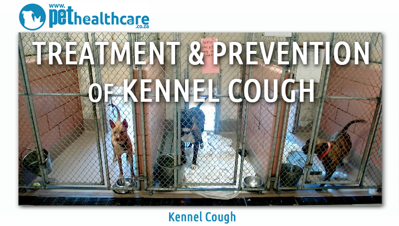 Kennel cough treatment and prevention
