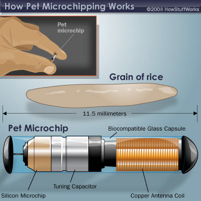 Microchip Options, Animal Health, Pet Insurance, diere versekering, troeteldierversekering suid afrika, South Africa, Pet Health Care, Pet Care health, petcarehealth, pethealthcare, ask the vet, dieremaniere, animal behaviour, sick animals, siek diere, honde, katte, Cats, Dogs, veterinary advice, dog walks, dog events, pet wellness, kitten care health, pet care health insurance, pet insurance health, pet care news, pet health care questions, pet care health claim form, pet care health application form, pet health care application form, pet health care claim form, pet care medical, dog health care, illness cover for cats and dogs, vet visits, find a vet, south african veterinary practices, vets south africa, animal welfare south africa, animal shelters in south africa, dog training, dog walking, Pet Friendly Holidays, pet health questions, pet health care services, pet services