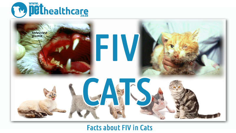 Where Can Fiv Cats Live