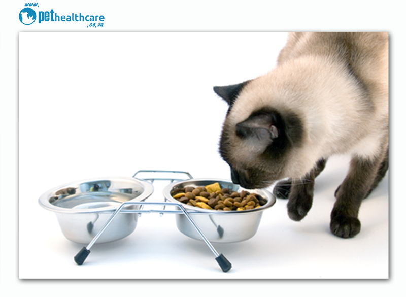 Geriatric pets and their diet