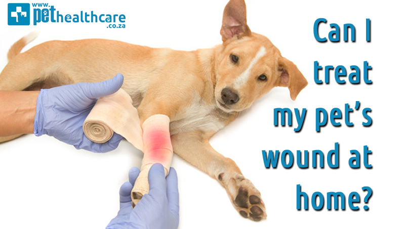 Can I Treat My Pets Wound At Home Pethealthcarecozawound Care