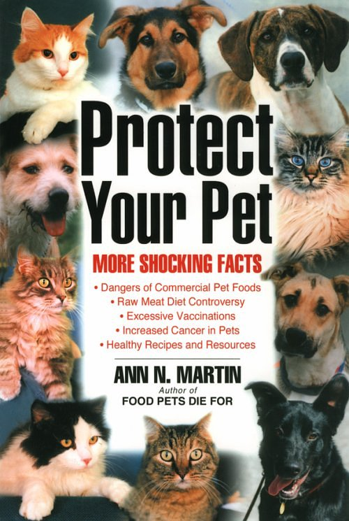 raw meat and dogs what you need to know pethealthcare