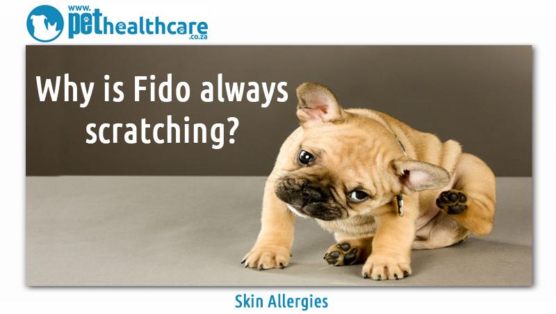 Skin Allergies In Pets Pethealthcare Co Za