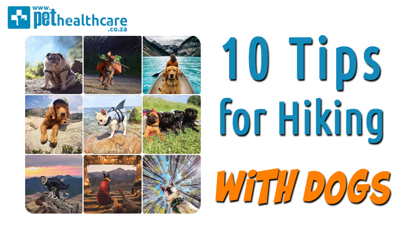 Hiking with Dogs and tips to make it easy Pet Insurance