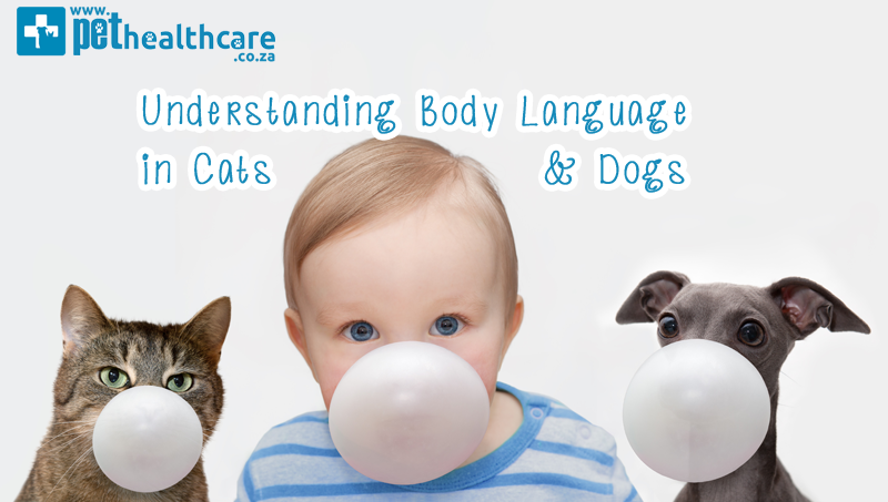 Understanding body language in cats and dogs Pet Healthcare PawPaw Pet Insurance