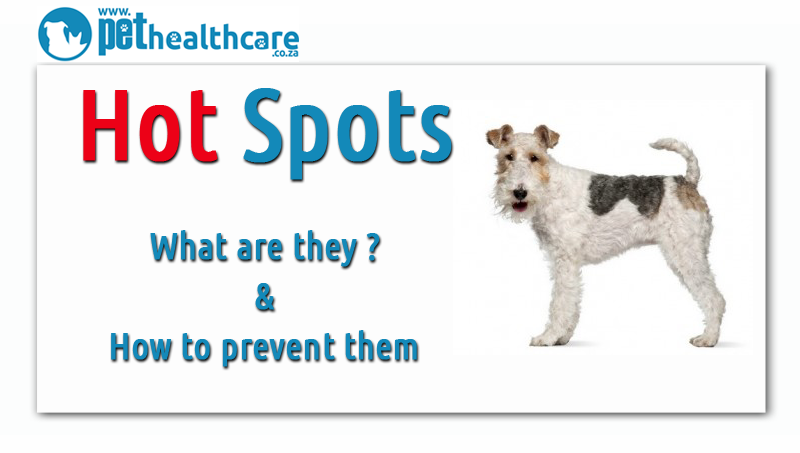 Understanding Hot Spots In Dogs Pethealthcare Co Zaunderstanding