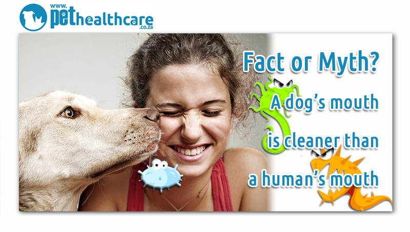 Are Dogs Mouths Really Cleaner Than A Human S