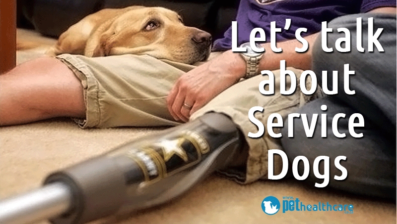 So What Is A Service Dog I Have Decided To Write This Article Out Of Sheer Inspiration From These Amazing Animals Read Below Find More