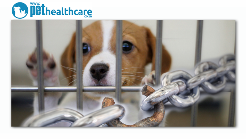 What is the most common weakest link at an Animal Rescue or