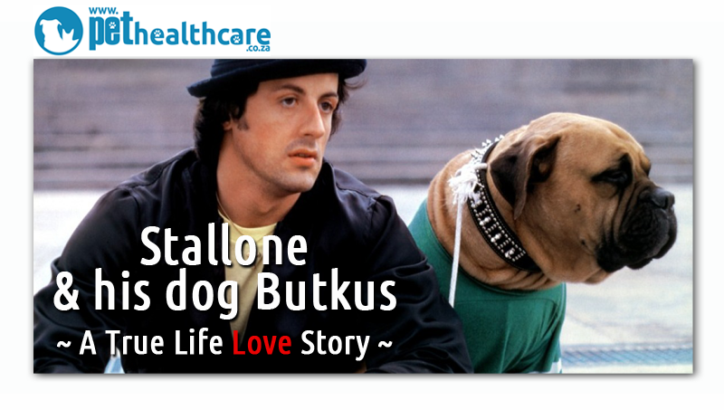 Sylvester Stallone and his dog Butkus | pethealthcare.co ...