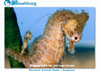 Best Animal Dads Seahorse