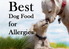 Best Dog Food, Skin Allergies, 2020, Top 10 Dry Foods, Pet Healthcare, Pet Advice