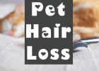 Pet Hair Loss, Control for Pets, Pet Healthcare, Hills Pet Nutrition