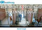 Kennel Cough Pet Health Care Bordetella virus