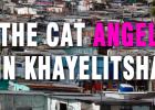 Khayelitsha Animal hospital, Mdzananda Animal Clinic, Steffi Bergman, cat rescue, kitten rescue, funds needed, animal shelter,