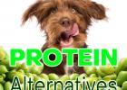 Montego Pet Nutrition, Healthcare, Pet Food, PROTEIN ALTERNATIVES