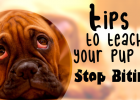 Tips to teach your new puppy to stop biting, Pet Healthcare, Pet Insurance, Pet Advice, Pet Behaviourist, Dog Training, Puppy School,