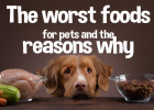 Good Snacks for pets, Toxic Food, Toxic Foods, Dangerous Food, Pet Snacks, Healthy Snacks, Chocolate, Cocoa, Grapes, Garlic & onions, Macadamia nuts, Avocado, Alcohol, Bread dough, Mouldy/off food, Bones/left overs, Ice Cream, Raw meat/raw fish, Plums, Raw eggs, Salt, Sweets, Hops, Carrots, Banana, Plain Popcorn, Berries, Beef/Chicken Strips, Chopped Liver,  the worst food for pets, top toxic foods for pets