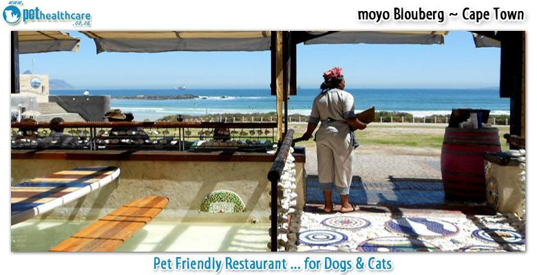Moyo Blouberg Pethealthcare Co Zapet Friendly Moyo Blouberg