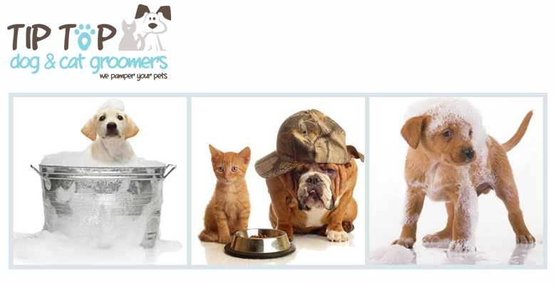 Tip Top Dog Cat Groomers Cape Town