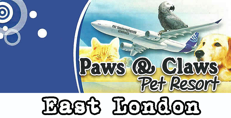 Paws claws pet resort for 5 paws hotel and salon