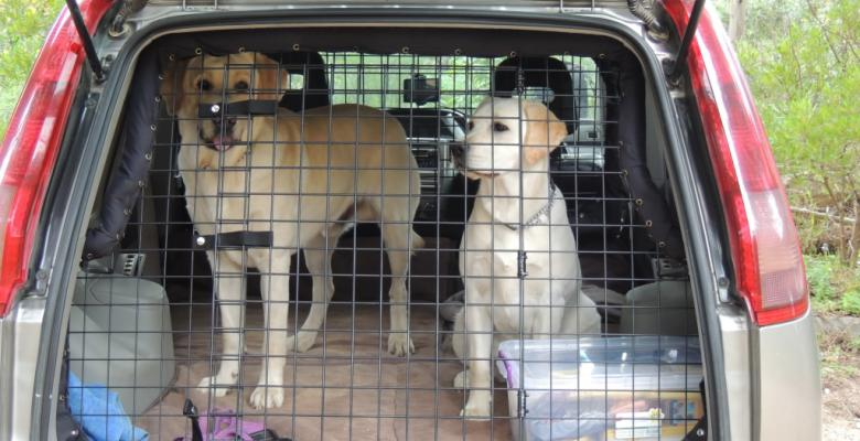 Dog Barriers for Cars | pethealthcare.co.zaDog Barriers ...