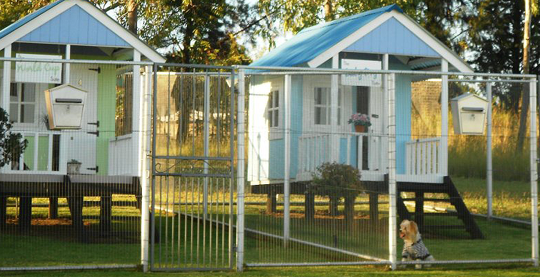 Dog Friendly Holidays With Day Care Kennel
