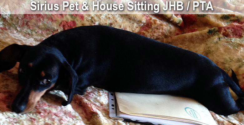 Sirius Pet and House Sitting Services | pethealthcare.co ...