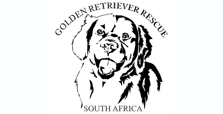 Golden Retriever Rescue South Africa | pethealthcare co