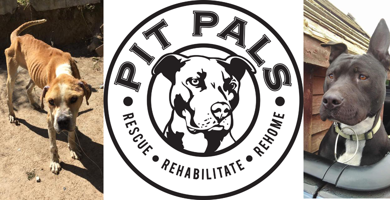 Town And Country Insurance >> Pit Pals | pethealthcare.co.zaPit Pals Breed Specific Animal Rescue Organisation in Cape Town