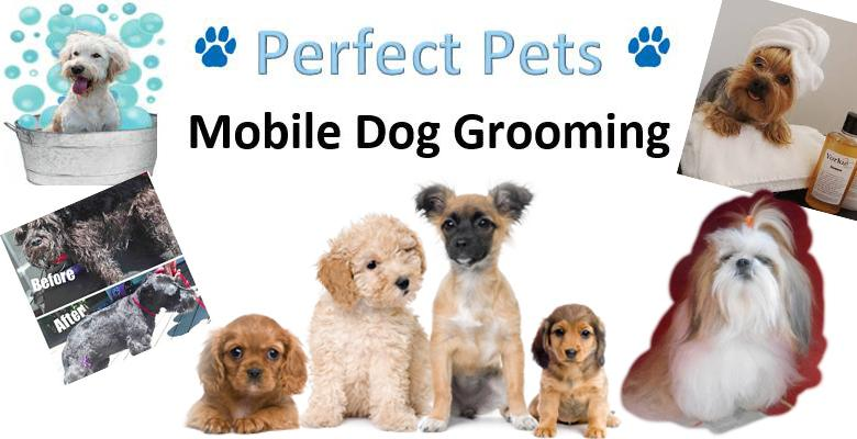 Perfect Pets Pethealthcare Co Zaperfect Pets Mobile Dog Grooming